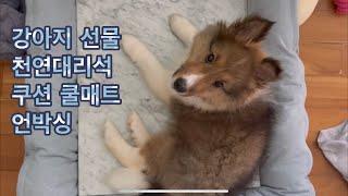 생애 첫 강아지선물! 천연대리석 쿠션 쿨매트 위에서 잘…