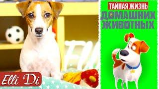 ТАЙНАЯ ЖИЗНЬ ДОМАШНИХ ЖИВОТНЫХ | РЕМЕЙК НА МУЛЬТФИЛЬМ | Elli Di Собаки