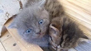 Спасение котят. Кошка родила 8 котят и бросила. Котята готовы к раздаче - выходили. Котята милые