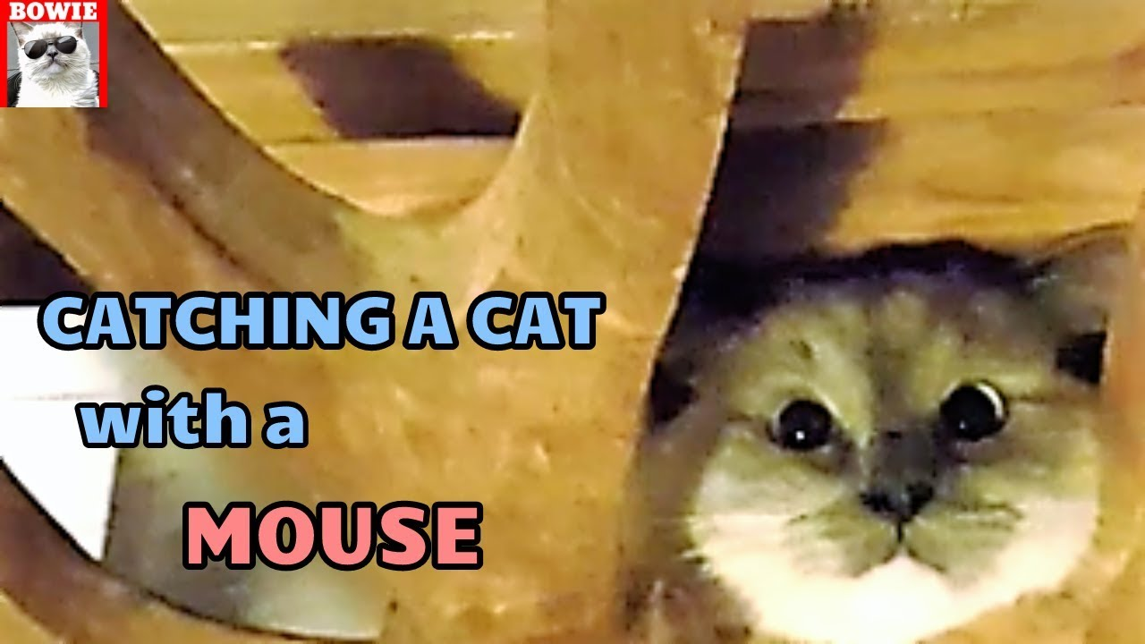 How to Catch a Cat with a Mouse