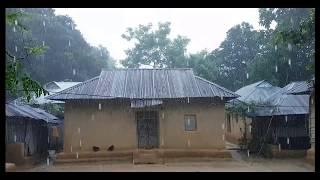 Rain Video -  Beautiful Rain Scene in Typical Bangladeshi Village
