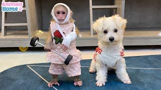 BiBi takes revenge on Amee dog