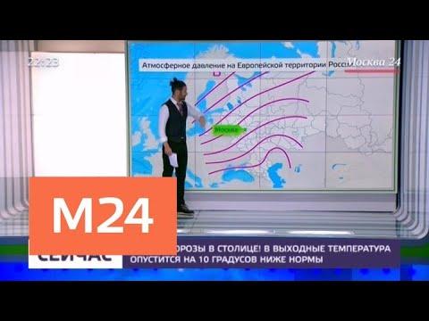 Экологи попросили москвичей подкармливать птиц в парках в морозы - Москва 24