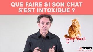 Que faire si son chat s'est intoxiqué ?