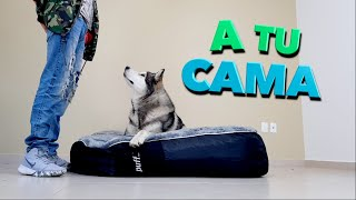 Enséñale a tu perro AMAR su CAMA
