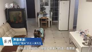 Smart dog receives delivery package for owner when it's at home alone