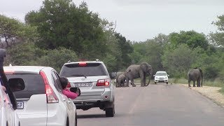 Stop And Wait For The Elephants!