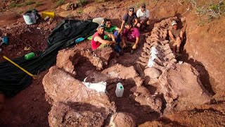 Fossils in Argentina Could Be Largest Dinosaur Ever Found