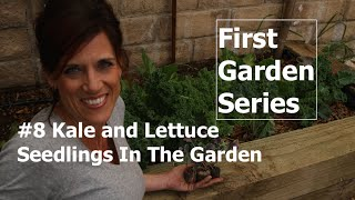 First Garden # 8 - Planting Lettuce & Kale Seedlings in the Garden