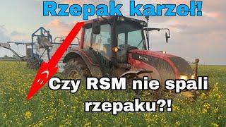 #223-Ostatni zabieg w rzepaku- zwalczyć szkodniki łuszczynowe! +50l RSM/ha!!!