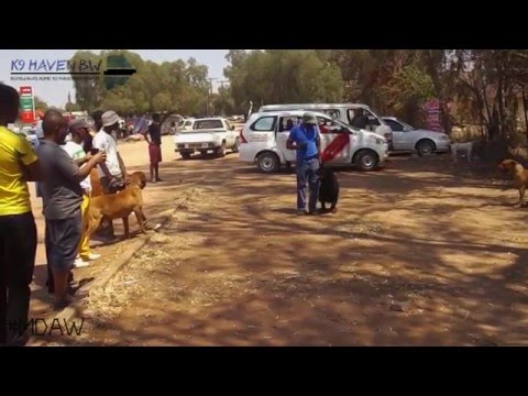 Molepolole Dog Awareness Walk official Video