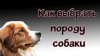 Как выбрать собаку, основные группы пород