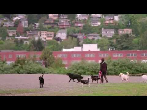 The Warren G Off-Leash Park in Seattle - City Guide