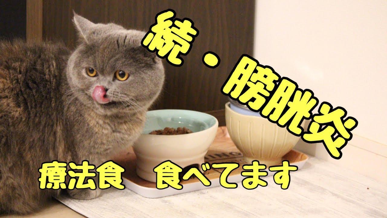 【ミヌエット 猫】続・膀胱炎〜療法食を食べている猫のお食事事情