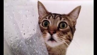 Самые смешные коты в мире! Лучшие приколы с котами 2016-2017 часть 3(CatsLIVE)