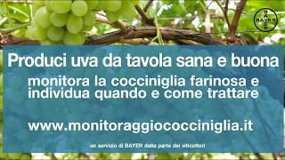 Monitoraggiococciniglia.it - Interviste