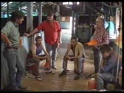 The Shearers and Rural Workers Union, Australian Shearing, 1995
