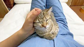 生後3ヶ月の子猫と成猫の甘え方の違いがこちら!