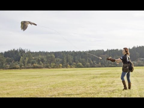 What's In My FALCONER'S BAG! ✨ Basic Essentials For The Field & Flying | The Falconry Series