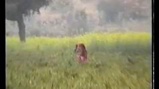 1997 - India, Rajastan - Piantagione di peperoncino piccante indiano