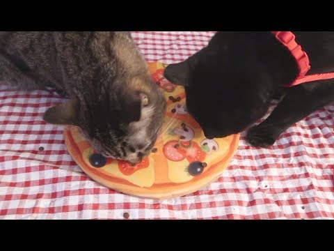 Boo Day 203 - A Doppelganger And A Cat Pizza - Easyology Cat Pizza