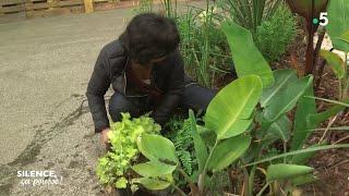 Découverte : les plantes seconde main