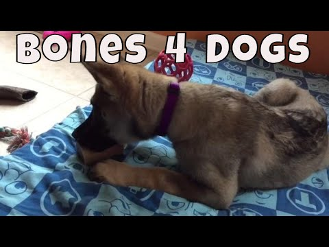 Raw Bones For Dogs - Raw Bones For Puppies