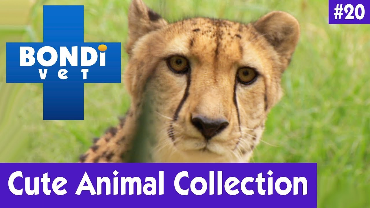 ????CUTE ANIMAL COLLECTION #20 | BONDI VET ????