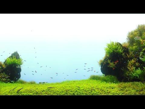 #28.プロが造る水草水槽 ~すみだ水族館~ Nature Aquascape