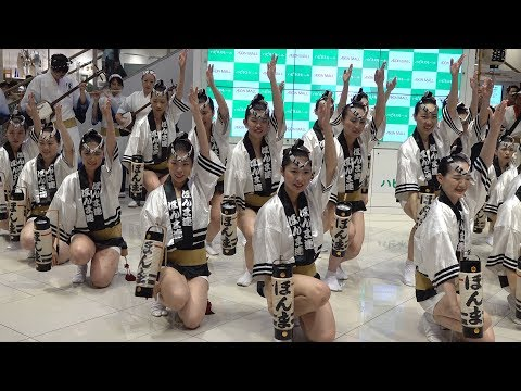 """女法被と提灯「ほんま連」 ~阿波おどり2019~  Awa Odori """"Honma-ren"""""""