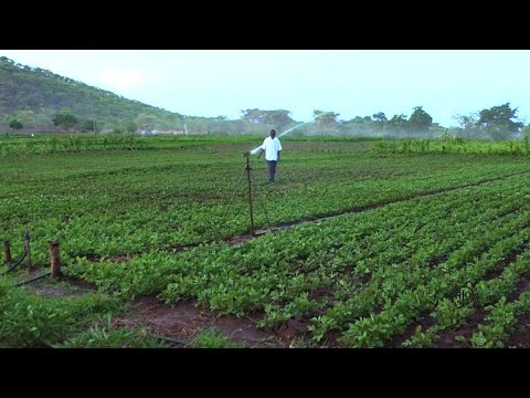 Improving productivity, living and working conditions for small holder farmers in Zimbabwe