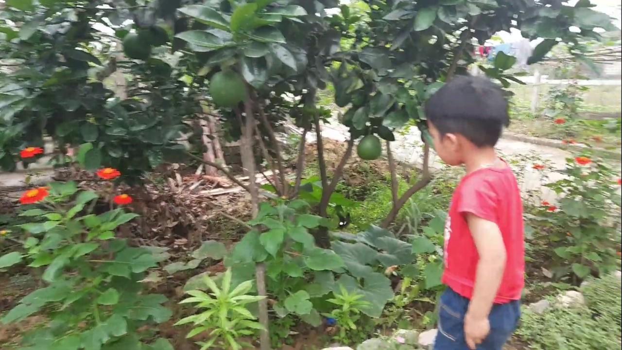 Siro đuổi bắt bướm