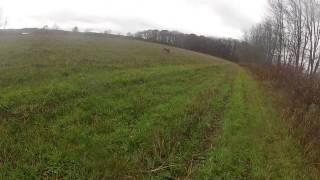 Weimaraner Pheasant Hunting