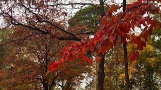 Birds and Fall Foliage in Arkansas