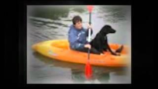 Dog Training Southampton - Aa Dog Training - 07714 769260