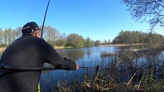 ПОКЛЁВА УДОЧКА В ДУГУ РУКИ ДРОЖАТ КТО ЭТО КАРАСЬ ЛИНЬ Ловля на поплавок Рыбалка в мае