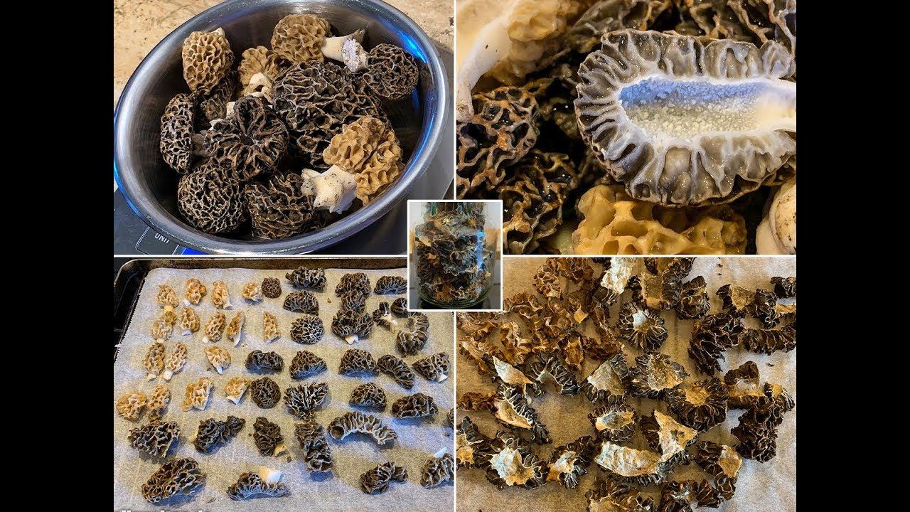 Pilze trocknen im backofen