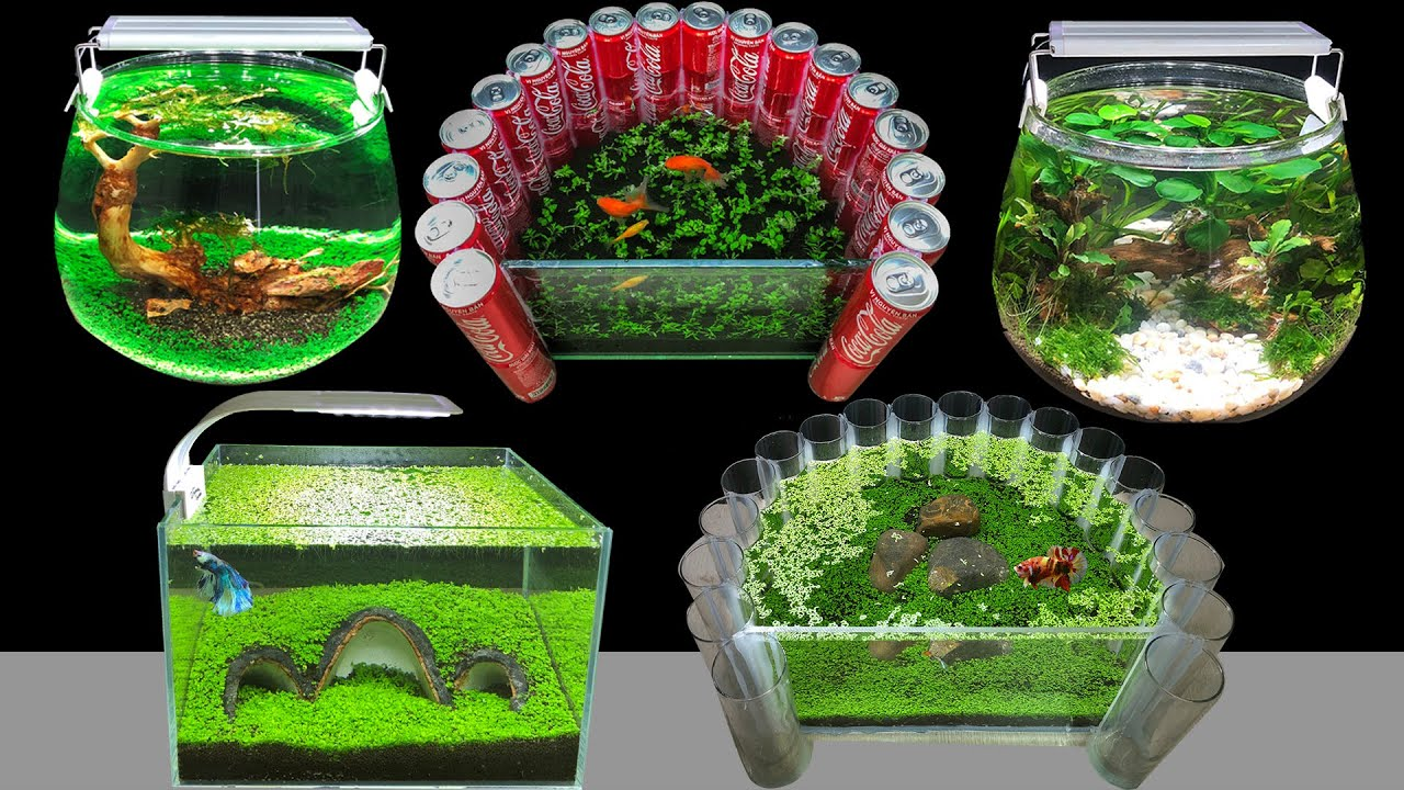 Top 5 DIY Planted Aquarium Decoration Ideas - How To Make Mini Aquascape At Home Decor - Mr Decor