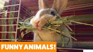 Don't Put Your Rabbit in This! | Funny Pet Videos 2019