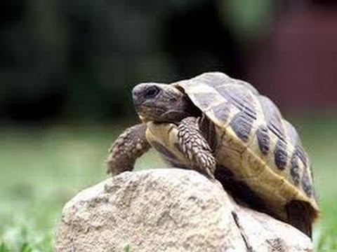 Черепаха - YouTube