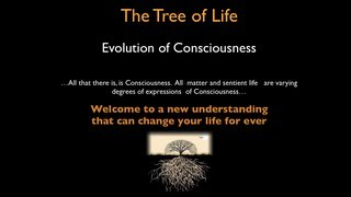 Tree of Life and Evolution of Human Consciousness