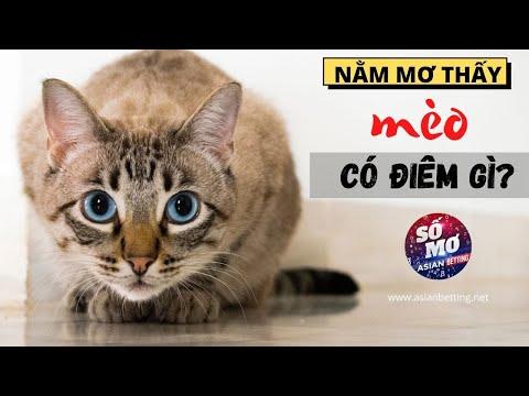 giải mã giấc mơ thấy 3 con mèo tại kqxsmb.info