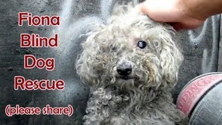 Blind dog rescue: Fiona - Please SHARE on FB & Twitter and help us raise awareness.  Thanks!