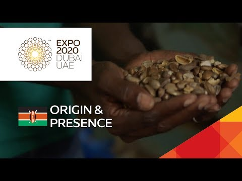 Could the croton nut be Kenya's next fuel source? // Expo Live  – Eco Fuels, Kenya