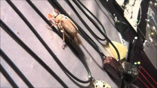 Un bel insecte se balade sur le stand.(Eurolac2011)