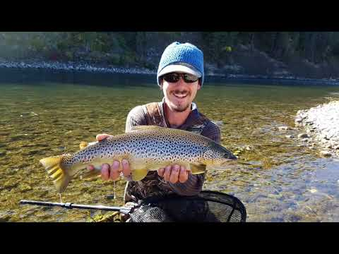 BIG Bow River Brown Trout!!! (Day 2)