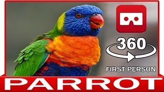 360° VR 4k - PARROT IN YOUR HAND - VIRTUAL REALITY 3D