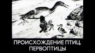 Происхождение птиц.  Первоптицы