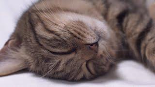 I Am A Catuber Andquotnyankoandquot catuberのandquotニャンコandquotです。【cute】【激かわ】
