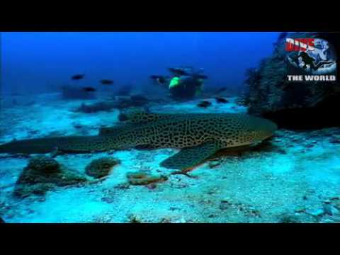Phuket Scuba Diving Video. Underwater Thailand With Wreck Diving, Seahorses, Sharks